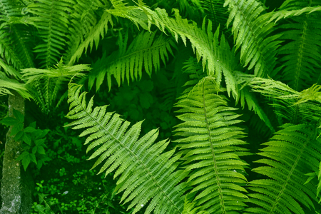 Green leaves of the fern against the background of the summer landscape. Stock Photo