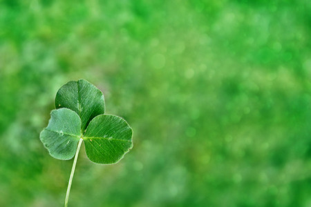 lucky clover: Green clover leaves on a background summer landscape