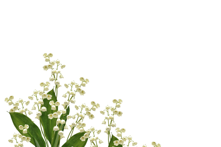 mayflower: Lily of the valley flower on white background Stock Photo