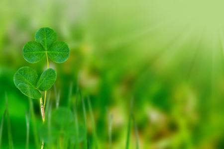 patrick: Green clover leaves on a background summer landscape
