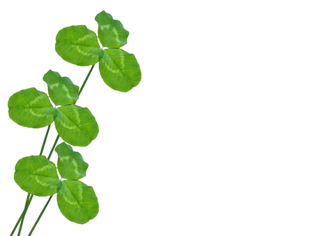 green clover leaves isolated on white background. St.Patrick s Day