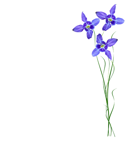 Blue flowers bells isolated on white background