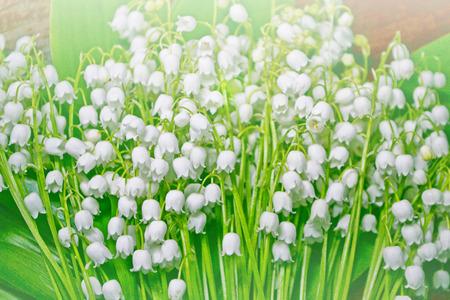 Paysage de printemps. fleurs muguet Banque d'images - 81508609