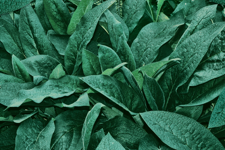 Abstract background of green leaves. Nature. Summer