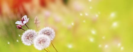 夏の風景の背景にふわふわタンポポの花。
