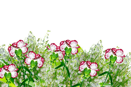 Colorful carnation flowers isolated on white background.