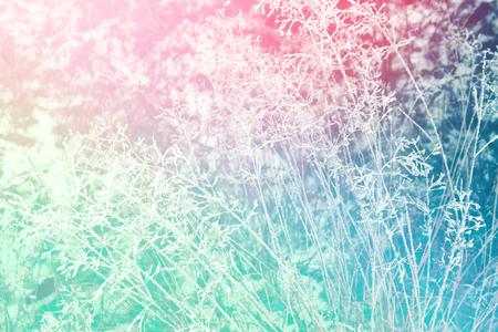 Blurred frozen grass. Winter abstract background. Landscape.
