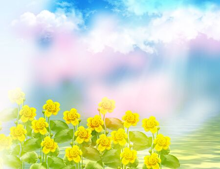 Flowers of water lilies on a background of blue sky with clouds Stock Photo