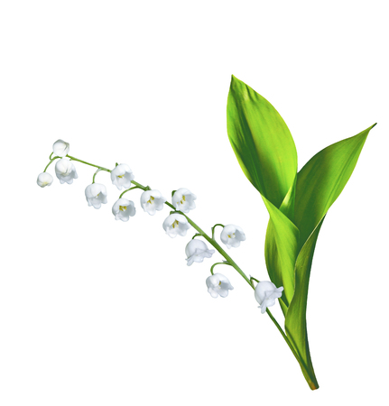 Lily of the valley flower on white background Archivio Fotografico