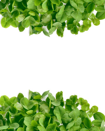 Green clover leaves on white background. St.Patrick s Day Stock Photo
