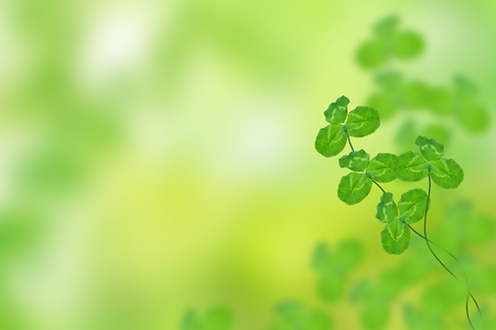 Green clover leaves on a background summer landscape. St.Patrick s Day