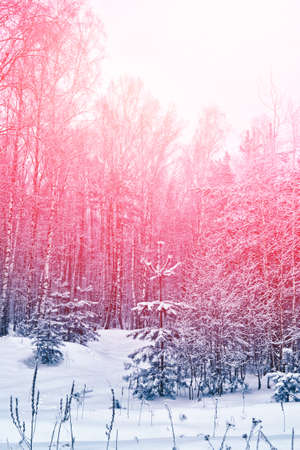Frozen winter forest with snow covered trees. Blur.