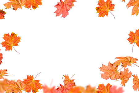 Bright colorful autumn leaves isolated on white background