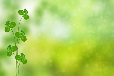 녹색 클로버 배경 여름 풍경에 나뭇잎 스톡 콘텐츠