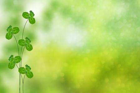 Trébol de hojas verdes sobre un fondo paisaje de verano Foto de archivo - 87966504