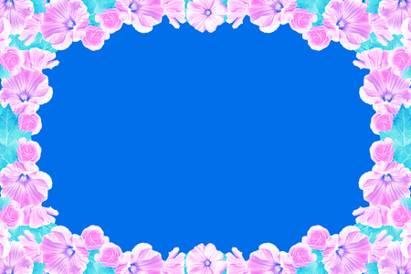 Floral background. Pink petunia flowers isolated on blue background. Stock Photo