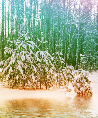 Blur. Frozen winter forest with snow covered trees.
