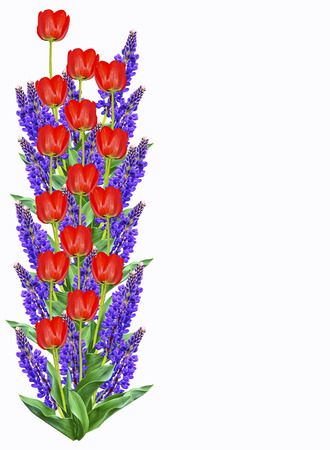 Bright lupine flowers and tulips isolated on white background