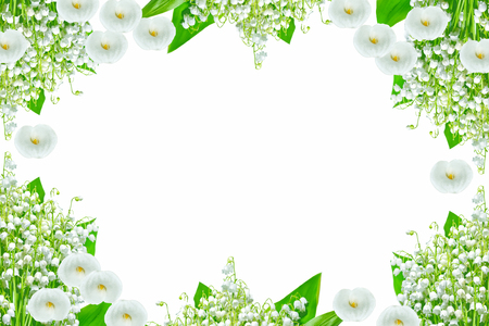 Lily of the valley flower on white background 스톡 콘텐츠