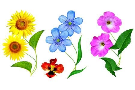 Bright flowers isolated on white background. Set. Stock Photo