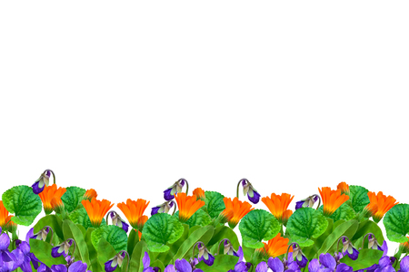 Floral background of bright flowers of violets and calendula.