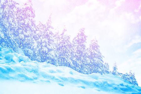 Blurred background. Frozen winter forest with snow covered trees.