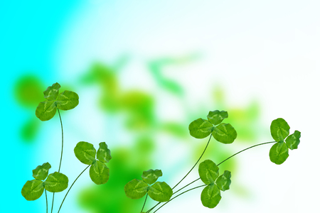 Green clover leaves on a background summer landscape. St.Patrick s Day. Stock Photo