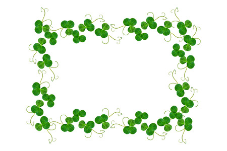 Leaf clover on white background. Green foliage. St.Patrick's Day.