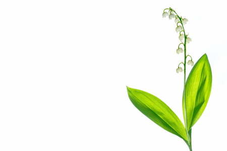 Lily of the valley flower on white background Zdjęcie Seryjne