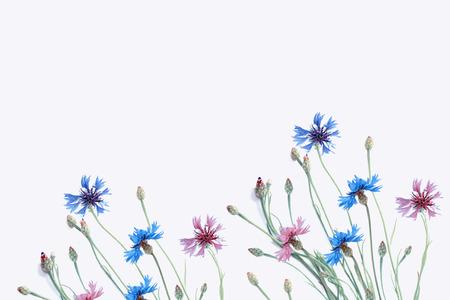 Wild flower cornflower isolated on white background Archivio Fotografico
