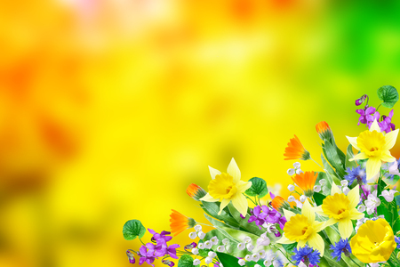 Bright and colorful flowers on the background of spring landscape. 免版税图像