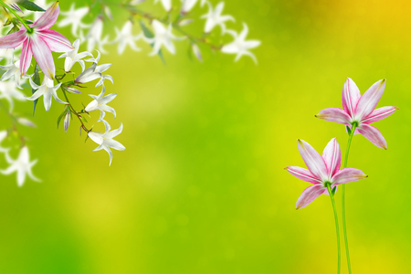Floral background with bright spring flowers bells