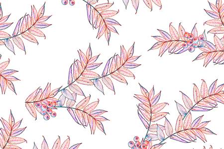 Bright colorful autumn foliage isolated on white background Stock Photo