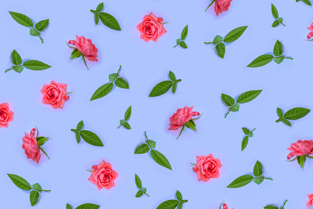 Bright colorful flower rose. Natural floral background. Standard-Bild - 107227962