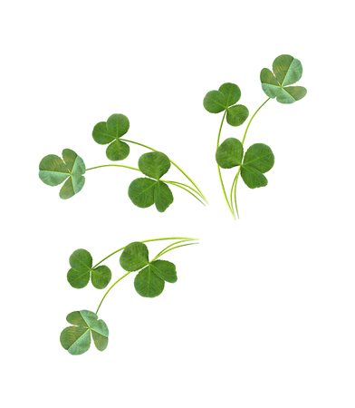 leaf clover on white background. Green foliage. St.Patrick s Day.