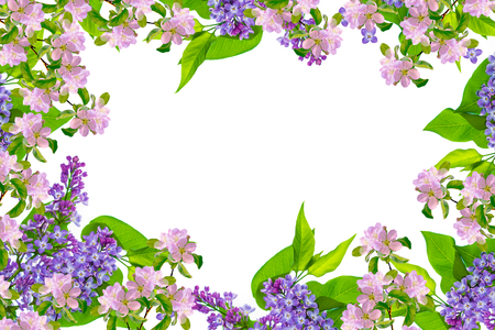 Spring flowers lilac isolated on white background. 版權商用圖片