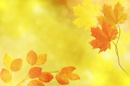 Paisaje de otoño con hojas de colores brillantes. Verano indio.