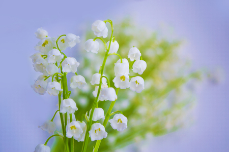 Natural floral background of spring flowers lily of the valley 스톡 콘텐츠