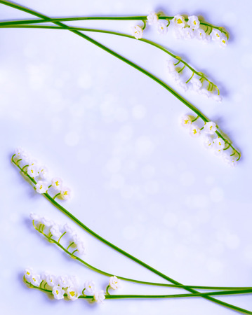 Natural background of spring flowers lily of the valley.