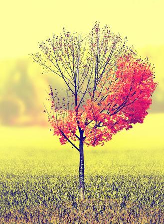 Paesaggio autunnale. Bellissimi alberi autunnali colorati nel parco. Messa a fuoco selettiva