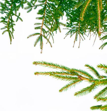 Mrożony zimowy las z pokrytymi śniegiem drzewami. Gałąź sosny białej.