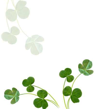 Leaves clover on white background. Green foliage. St.Patrick s Day.