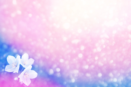 Jazmín blanco La rama delicadas flores de primavera