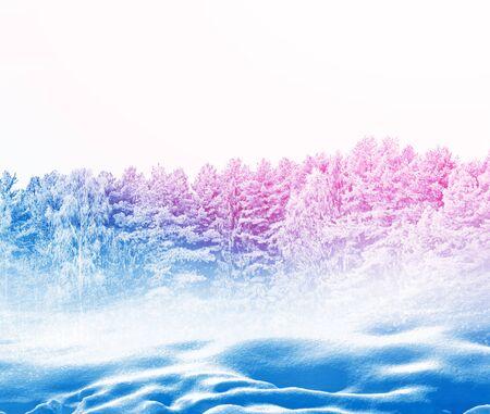 Bevroren winter bos met sneeuw bedekte bomen.