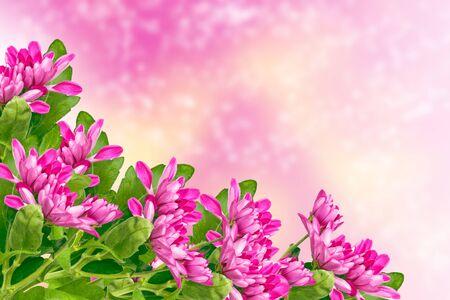 Bunte Chrysanthemenblumen auf einem Hintergrund der Herbstlandschaft