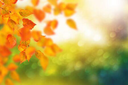 Paesaggio autunnale con foglie colorate luminose. Estate indiana.
