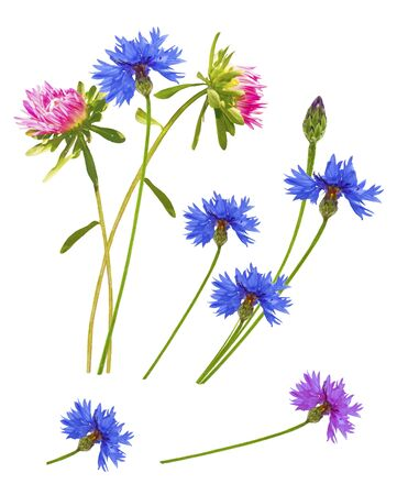 Colorful autumn flowers of aster, cornflower on a white background. bouquet