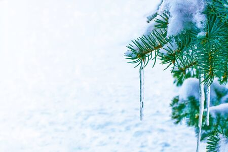 Frozen winter forest with snow covered trees. nature