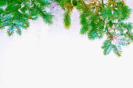 Bosque de invierno congelado con árboles cubiertos de nieve. Rama de coníferas. naturaleza Foto de archivo