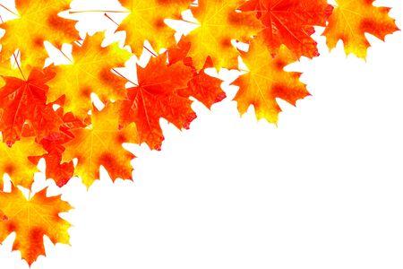 Heldere kleurrijke herfstbladeren geïsoleerd op een witte achtergrond. natuur
